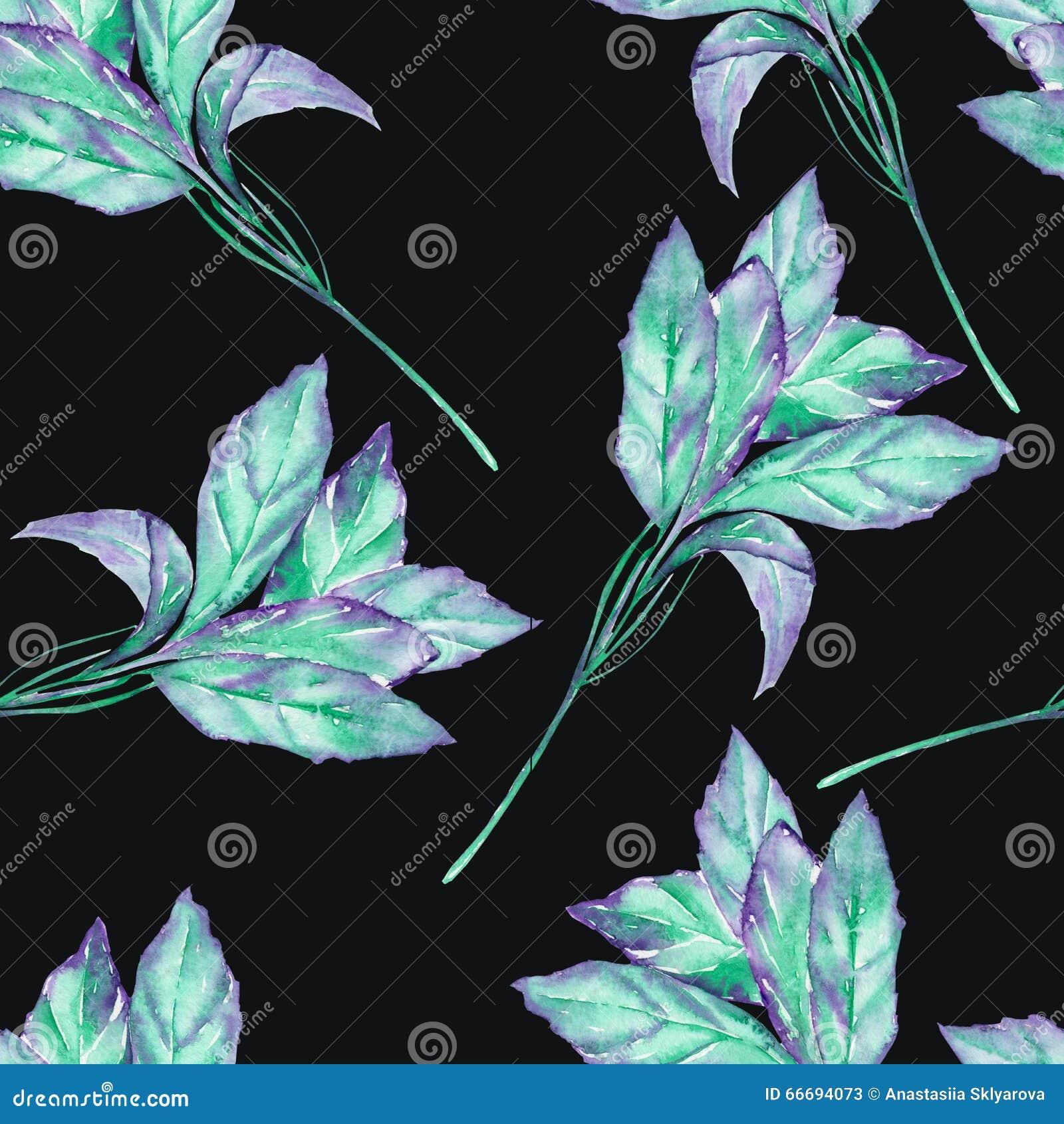Een naadloos patroon met het waterverf groene basilicum op een zwarte achtergrond stock - Geschilderde bundel ...