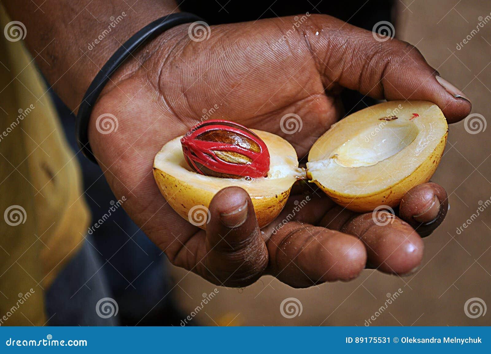 Een notemuskaat in een hand van een mens van Zanzibar