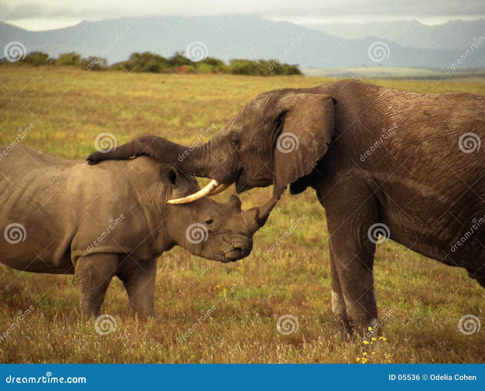 Een olifant en een rinoceros