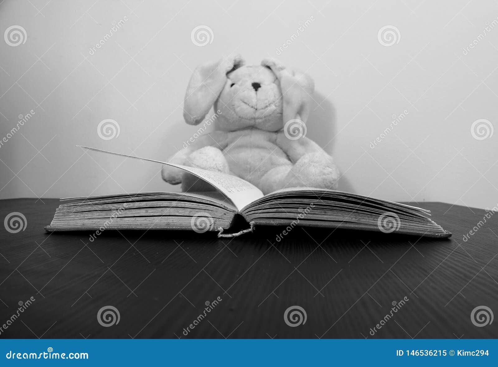 Een open boek ligt op een lijst Een vaag pluchestuk speelgoed, lichtjes, wordt gezien zittend op de achtergrond