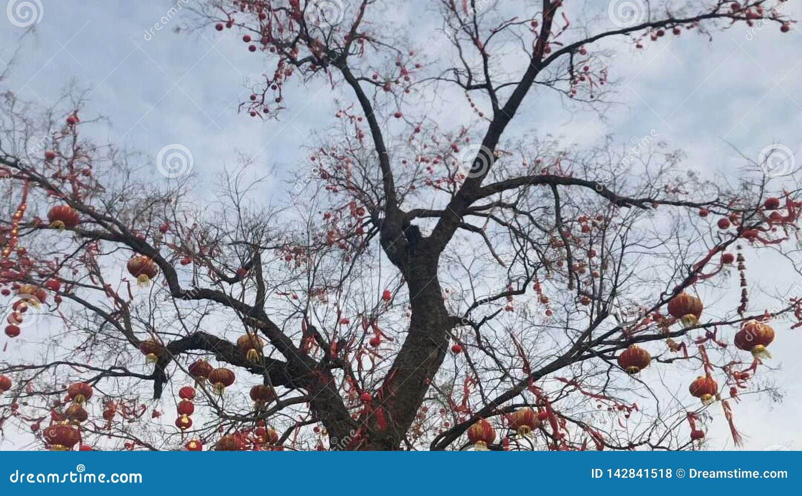 Een oude boom is behandeld met kleine lantaarns