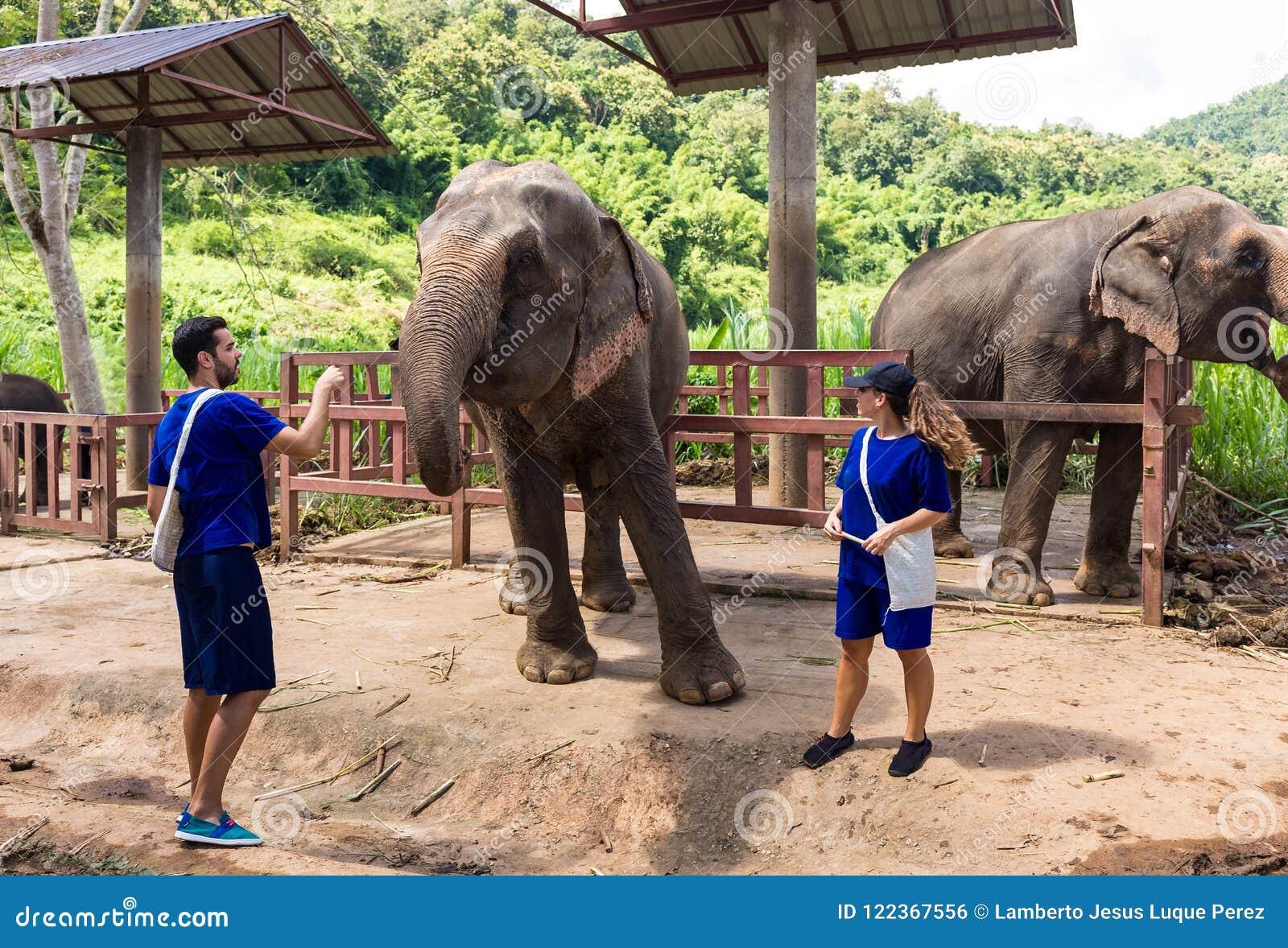 Een paar geeft voor olifanten in een heiligdom in de wildernis van Chi