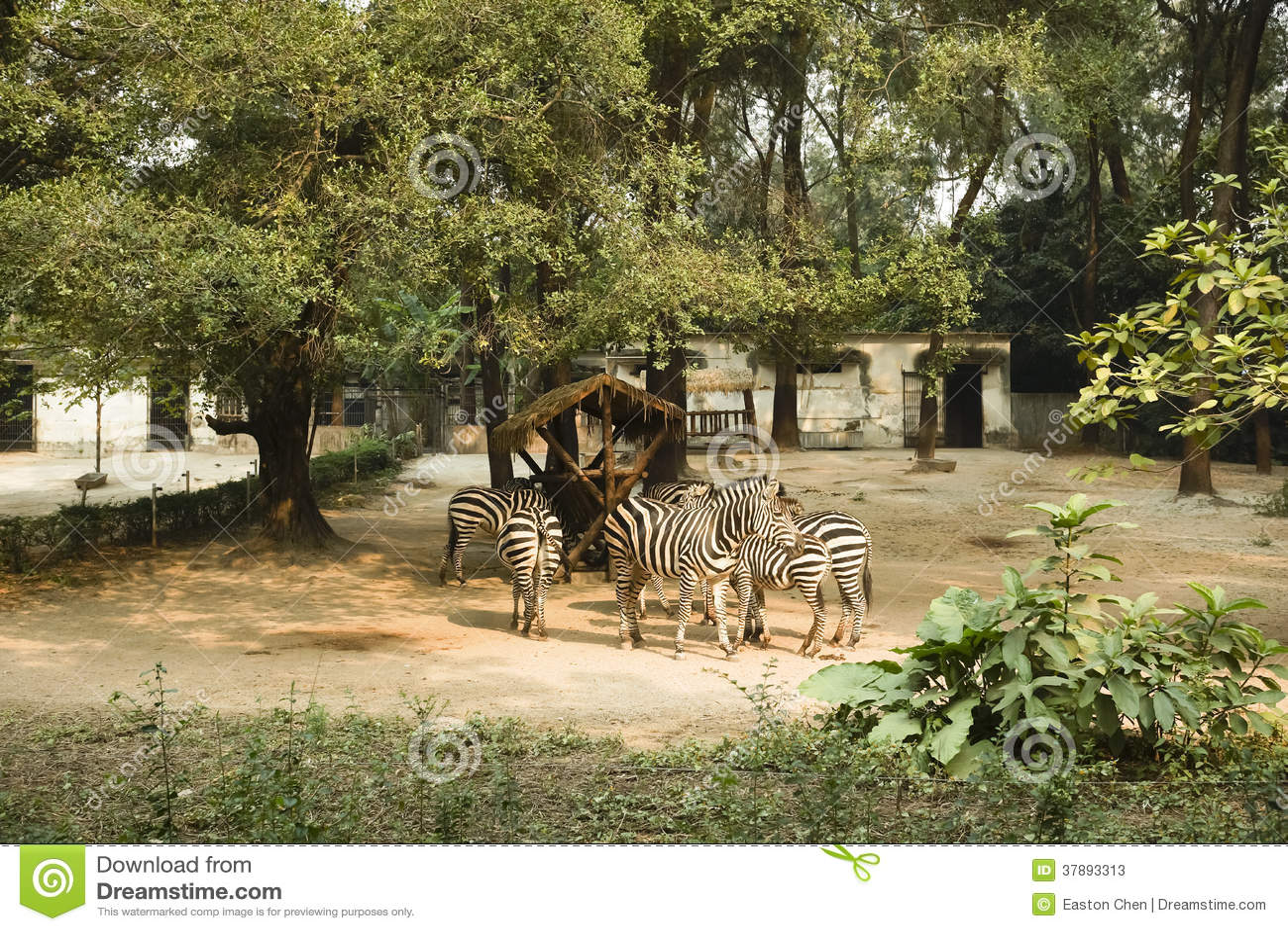 Een paar zebras