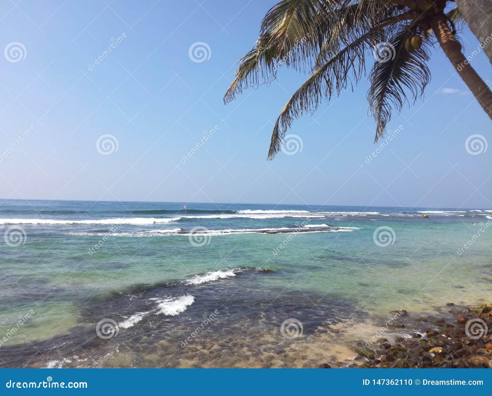 Een palm op een mooi strand