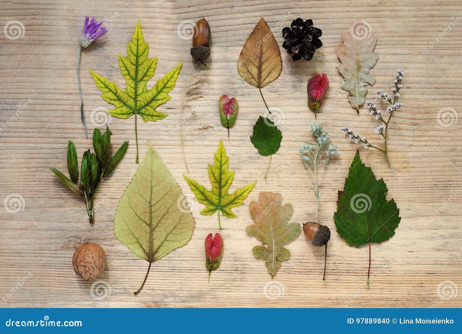 Een patroon van de herfst vindt - gele esdoornbladeren, eiken, droge wilde bloemen, eikels Houten achtergrond De samenstelling va