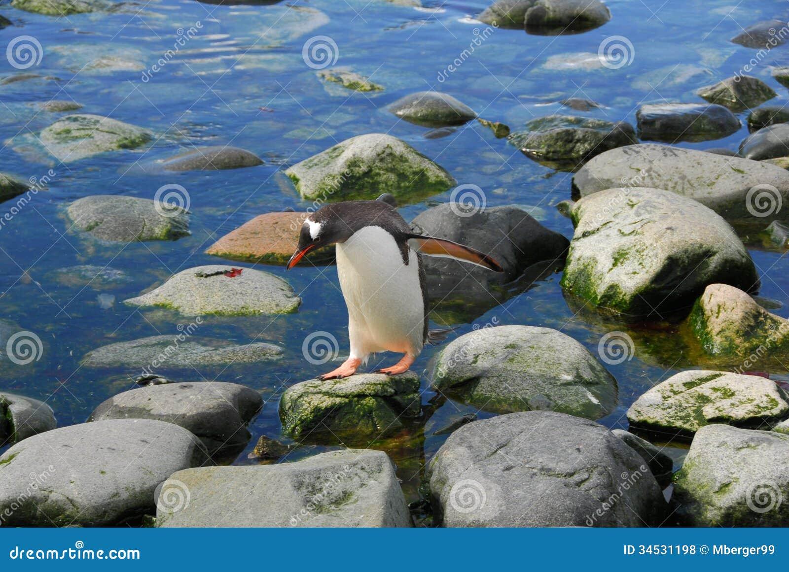 Een pinguïn op de rotsen