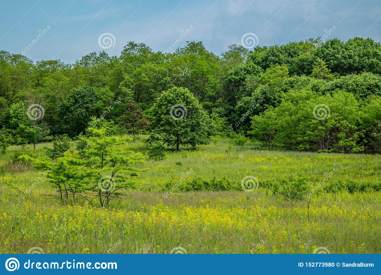Een prairie van midwesten en een boslandschap