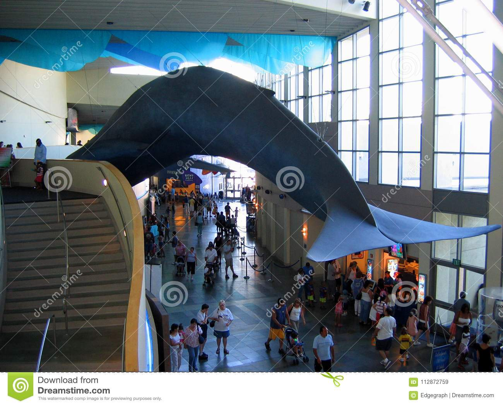 Een reusachtige blauwe vinvisvertoning binnen het belangrijkste complex Aquarium van de Stille Oceaan, Long Beach, Californië, de