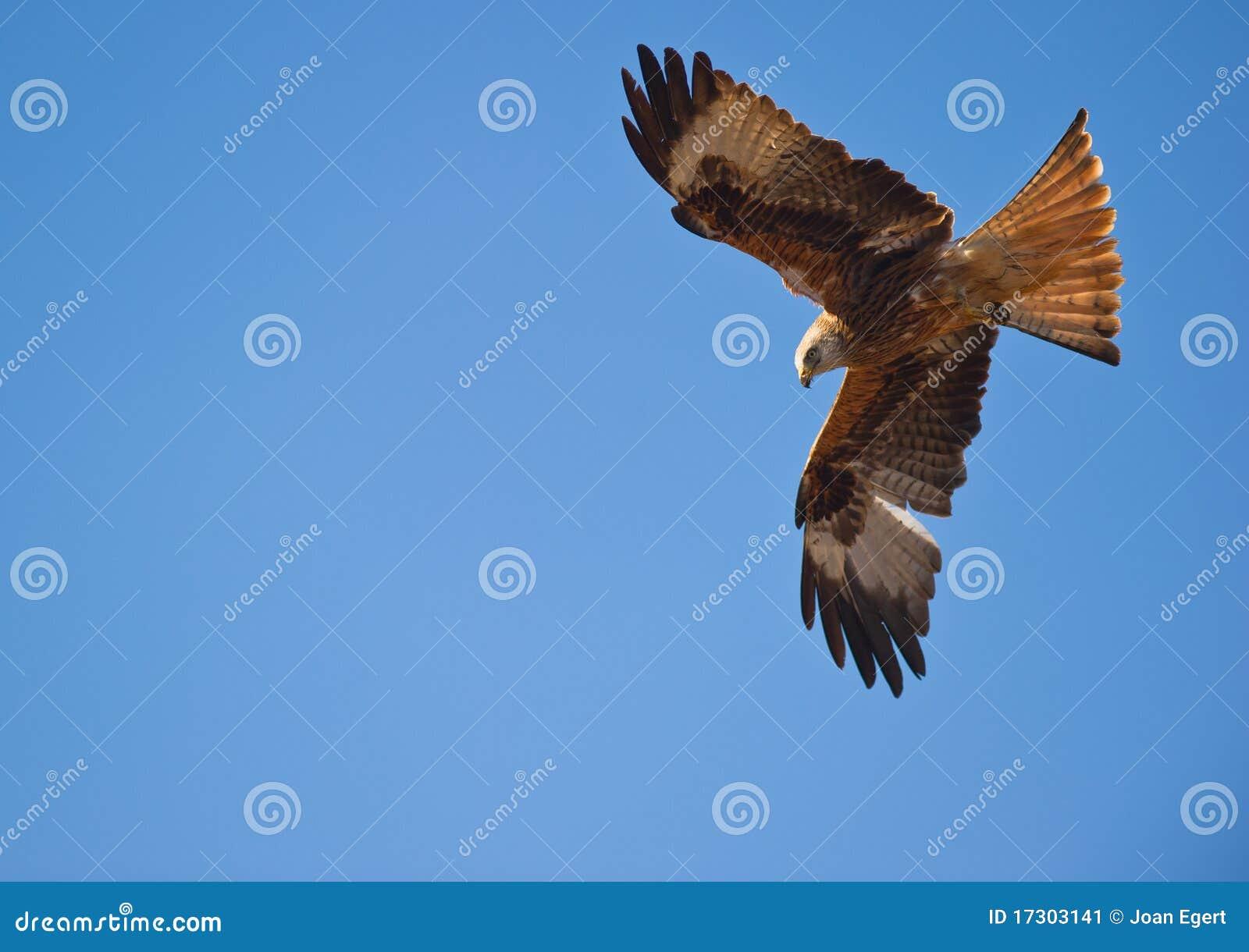 Een rode Vlieger, meester van de wind