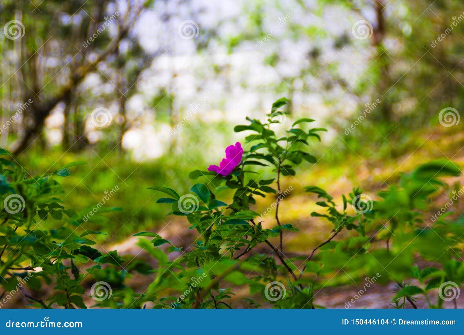 Een roze bloem op groene vage achtergrond