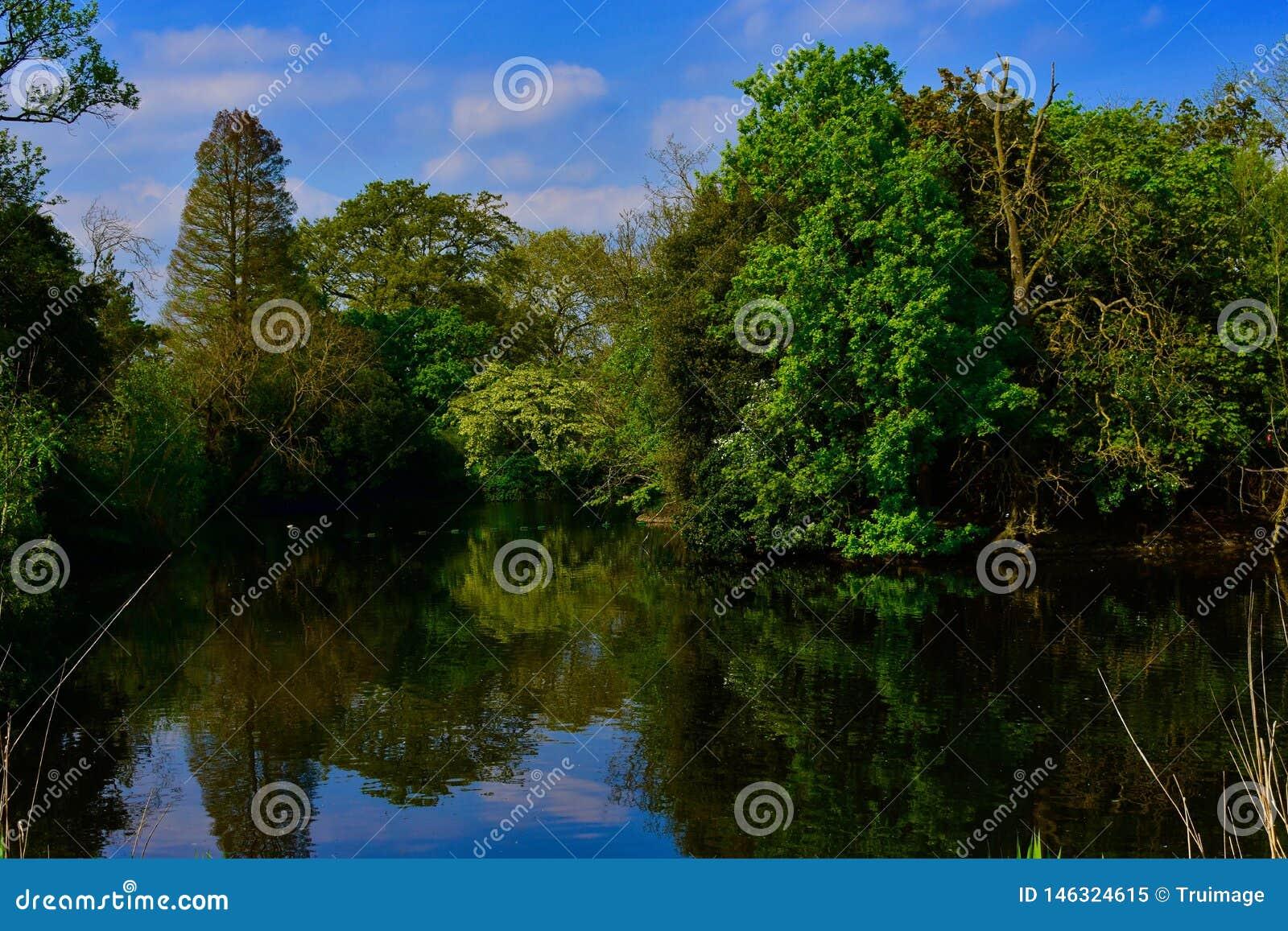 Een rustige scène door het meer