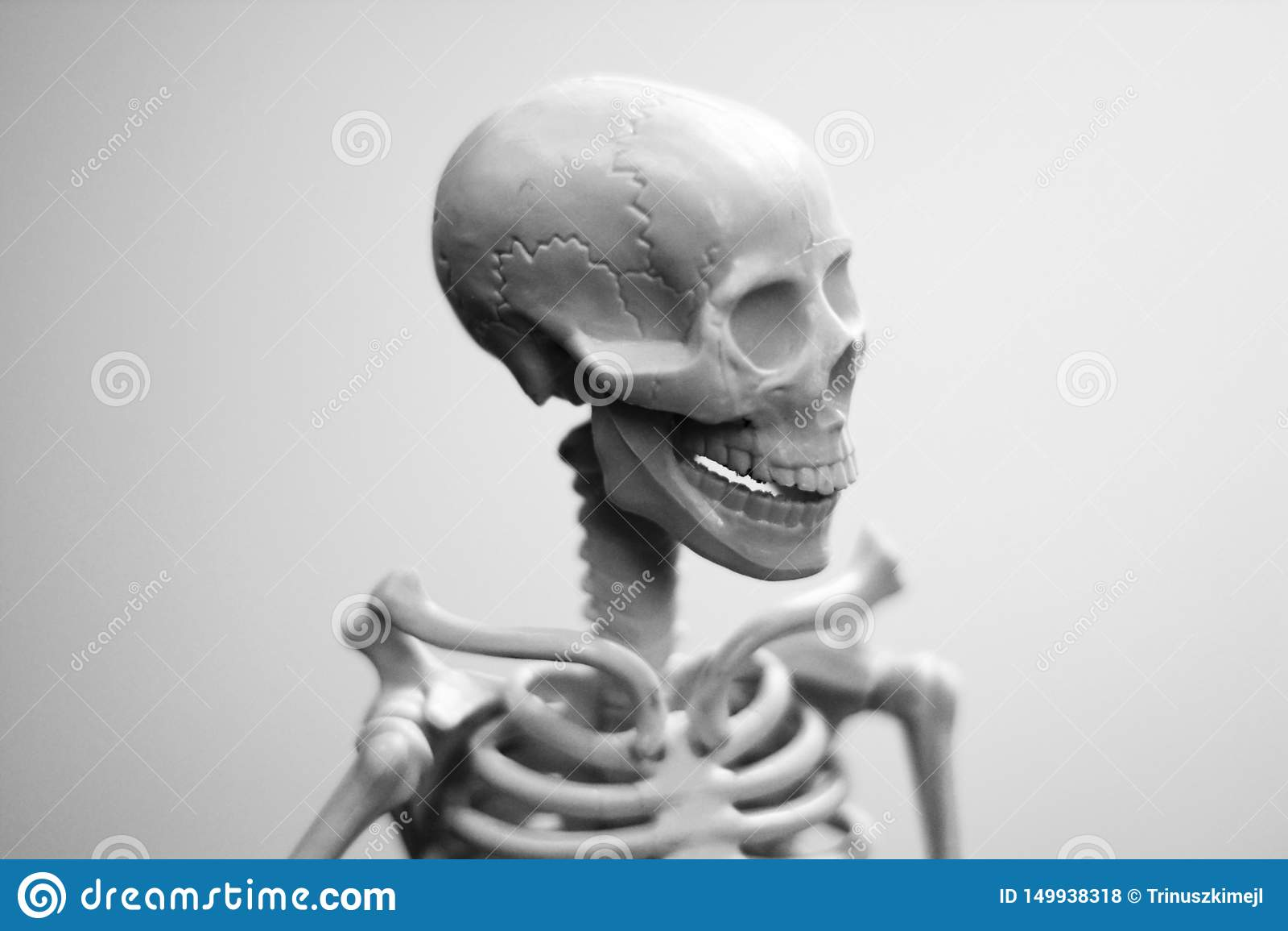 Een schedel van de glimlachende mens