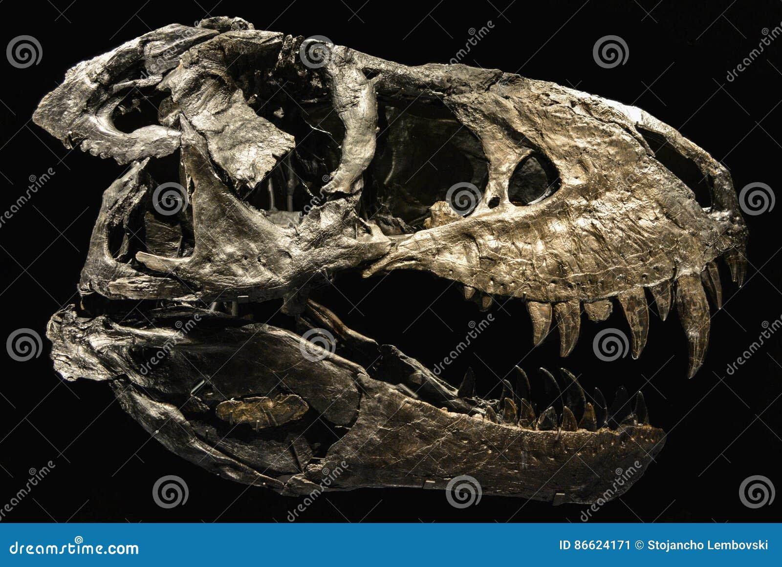 Een skelet van een dinosaurus