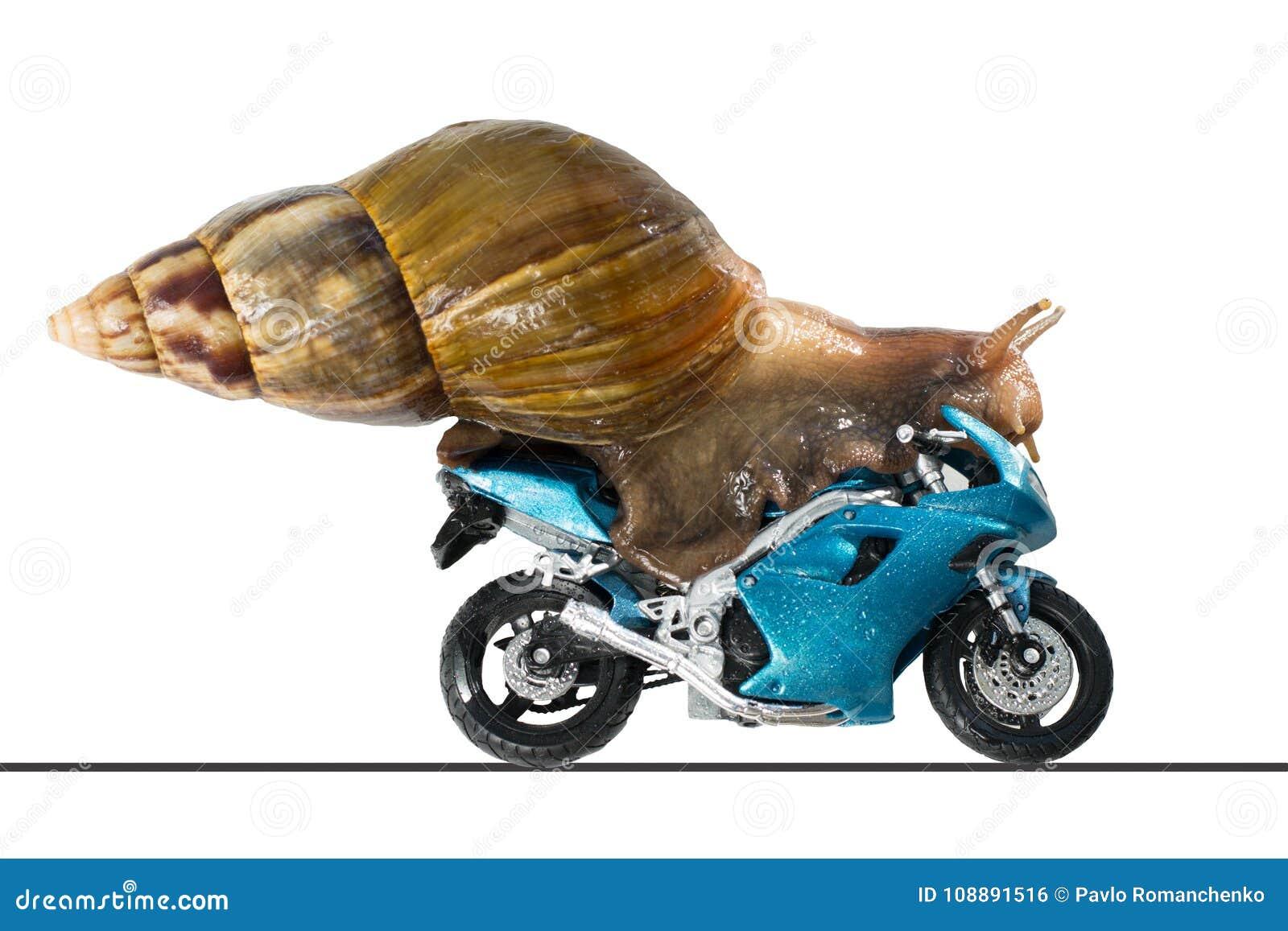 Een slak berijdt een het rennen motorfiets, concept snelheid en succes, op een witte achtergrond
