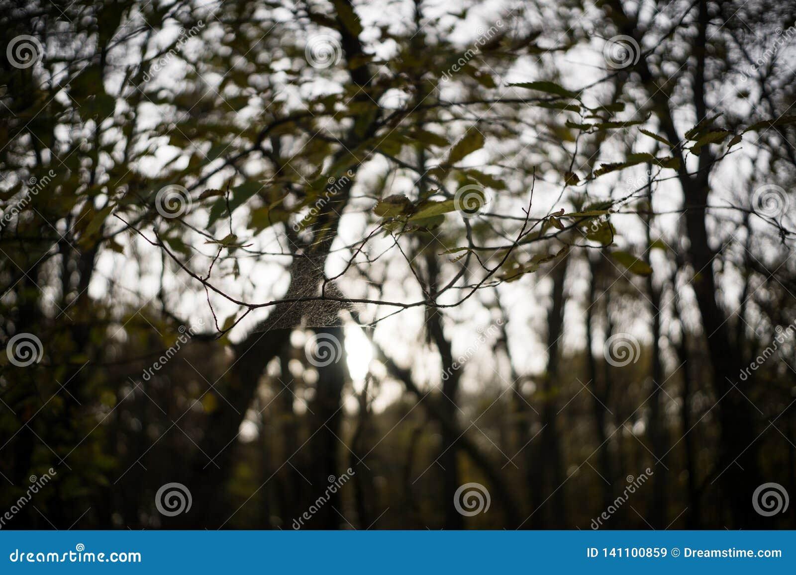 Een Spinneweb wordt opgeschort tussen Twee Bomen in Jester Park, Iowa
