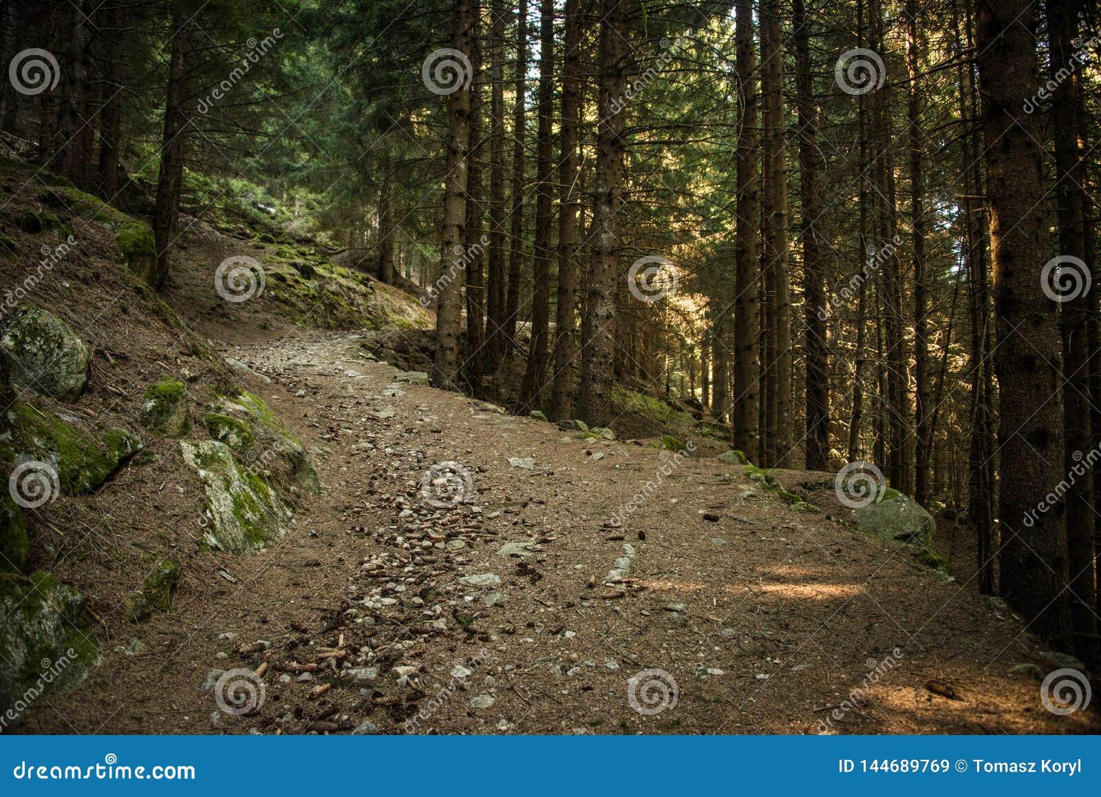 Een steenachtige weg in een donker bos slechts klein zonlicht tussen de bomen