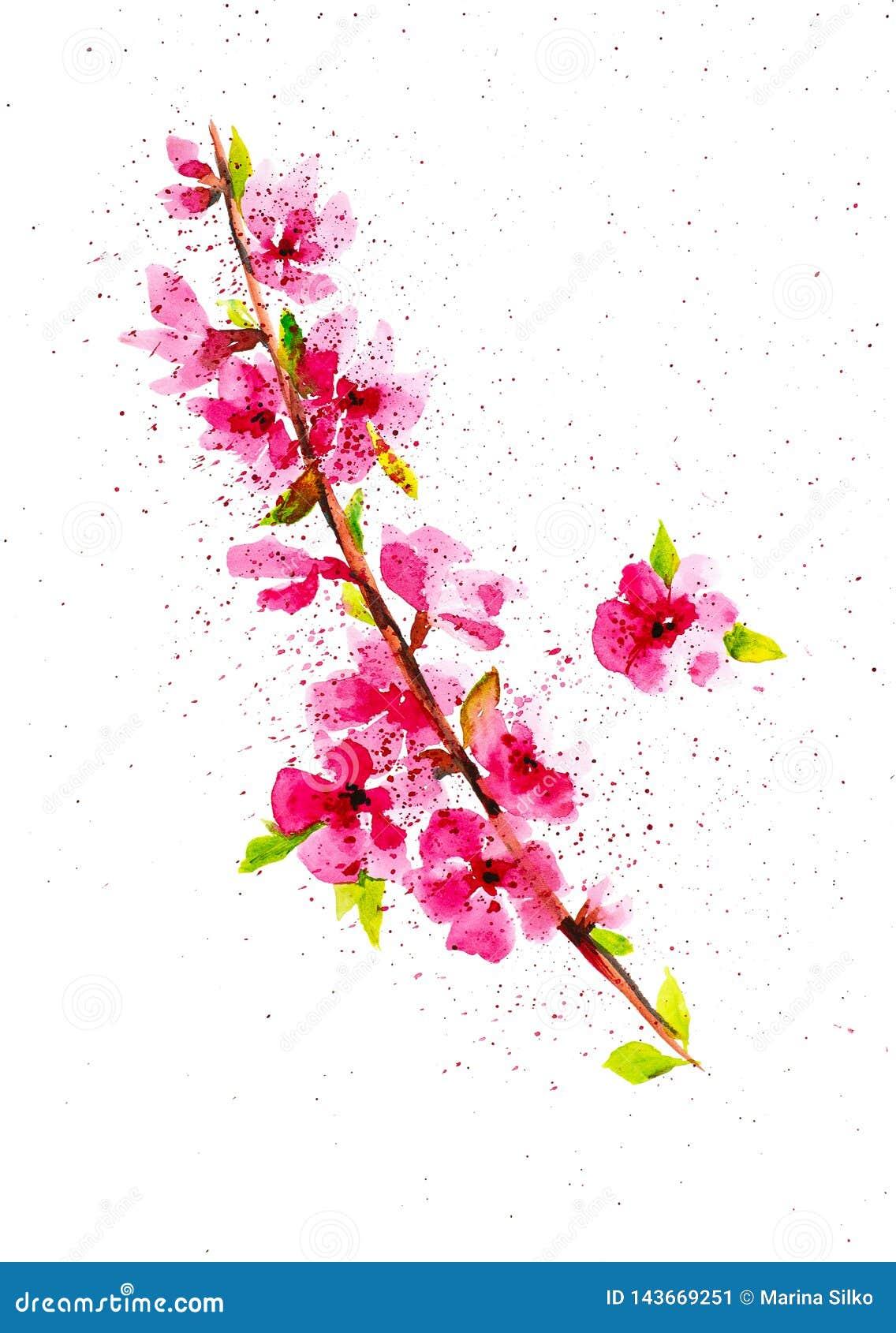 Een tak van een bloeiende Apple-boom onder abstracte dalingen Waterverfillustratie op witte achtergrond wordt ge?soleerd die