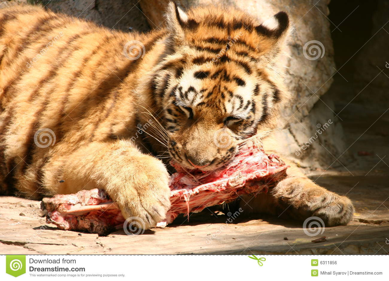 tijger eet man op