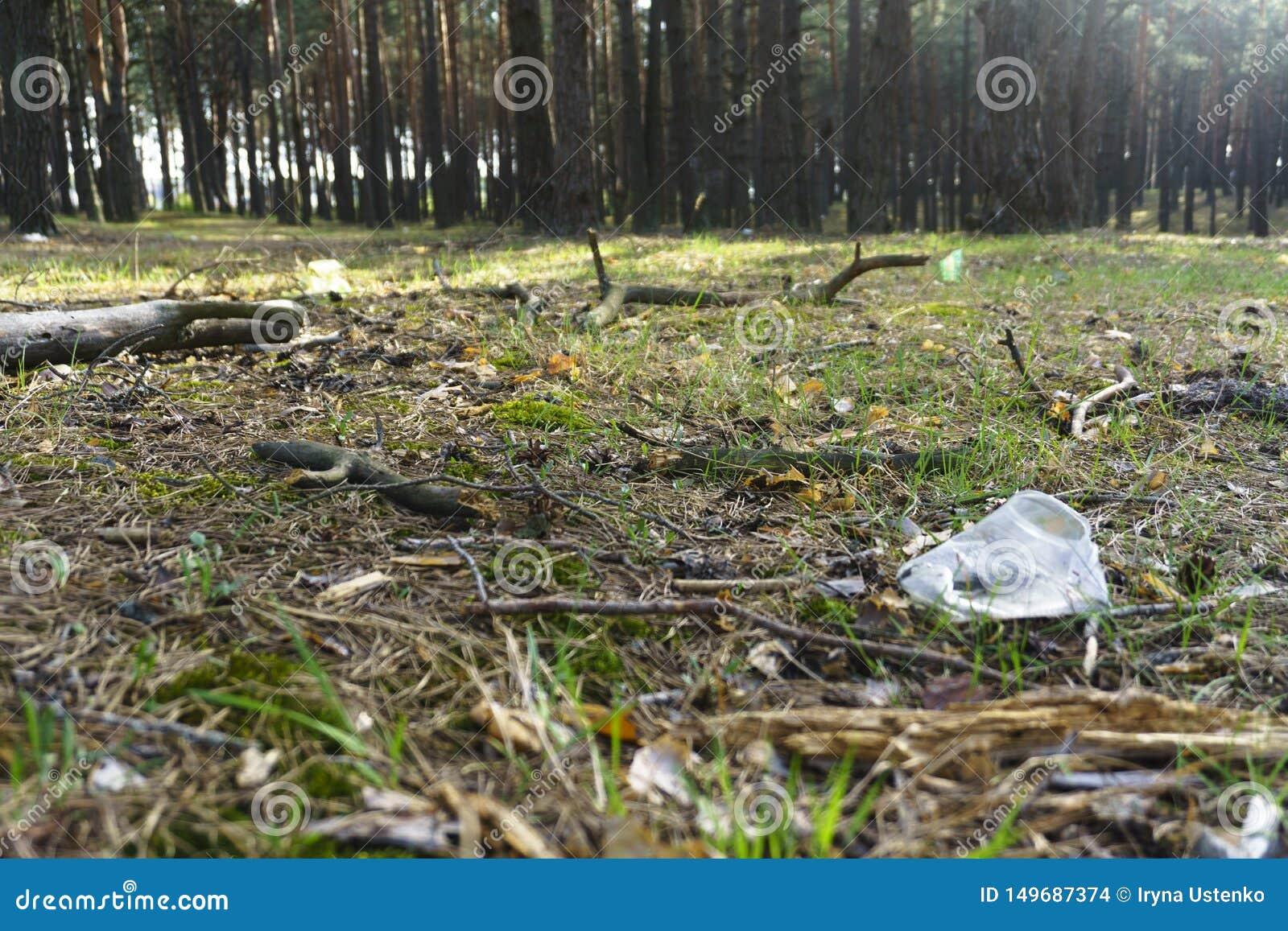 Een transparante plastic Kop in het bosprobleem van ecologie