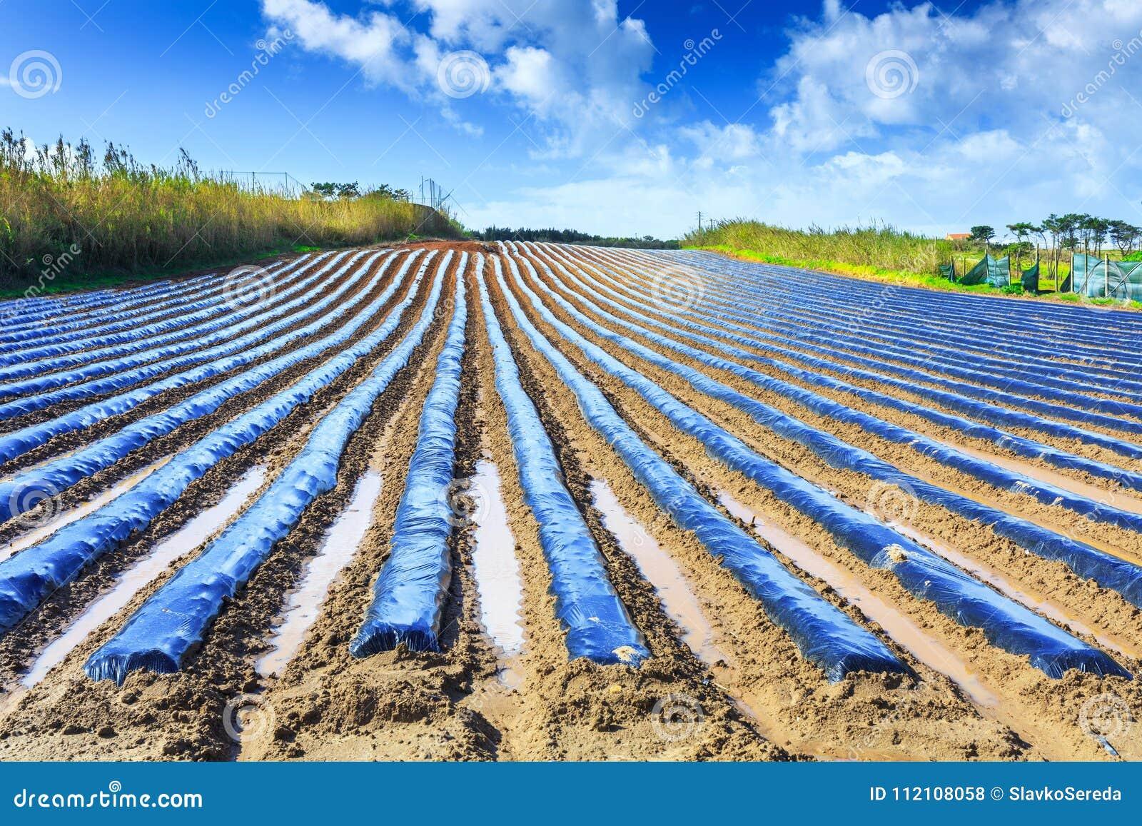 Een typische landbouwtechnologie van vroege de lentecultuur van