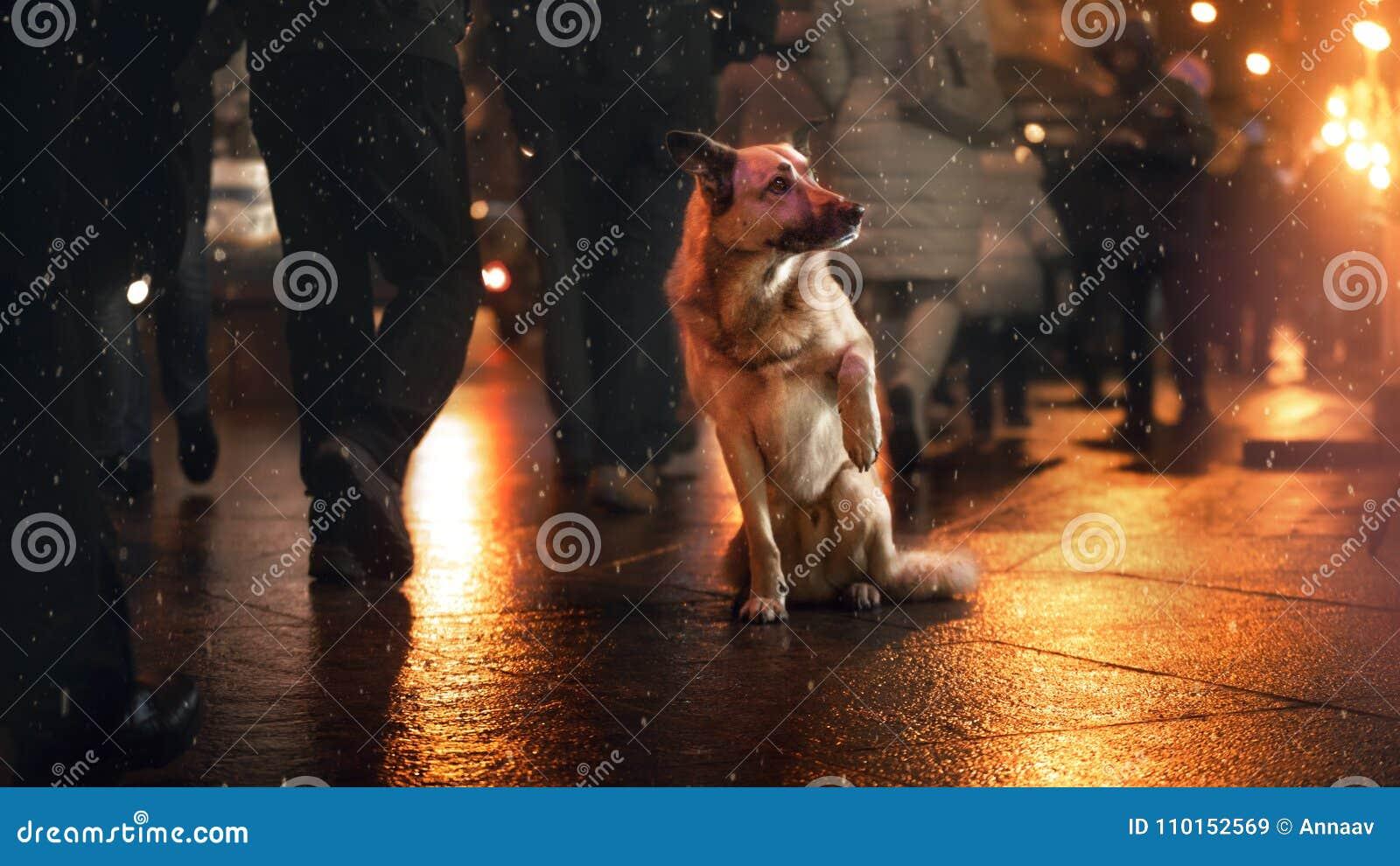 Een verdwaalde hond in de stad Nacht op de straat