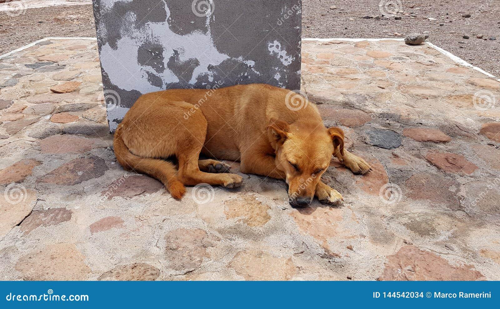 Een verdwaalde hond in San Pedro de Atacama, Chili