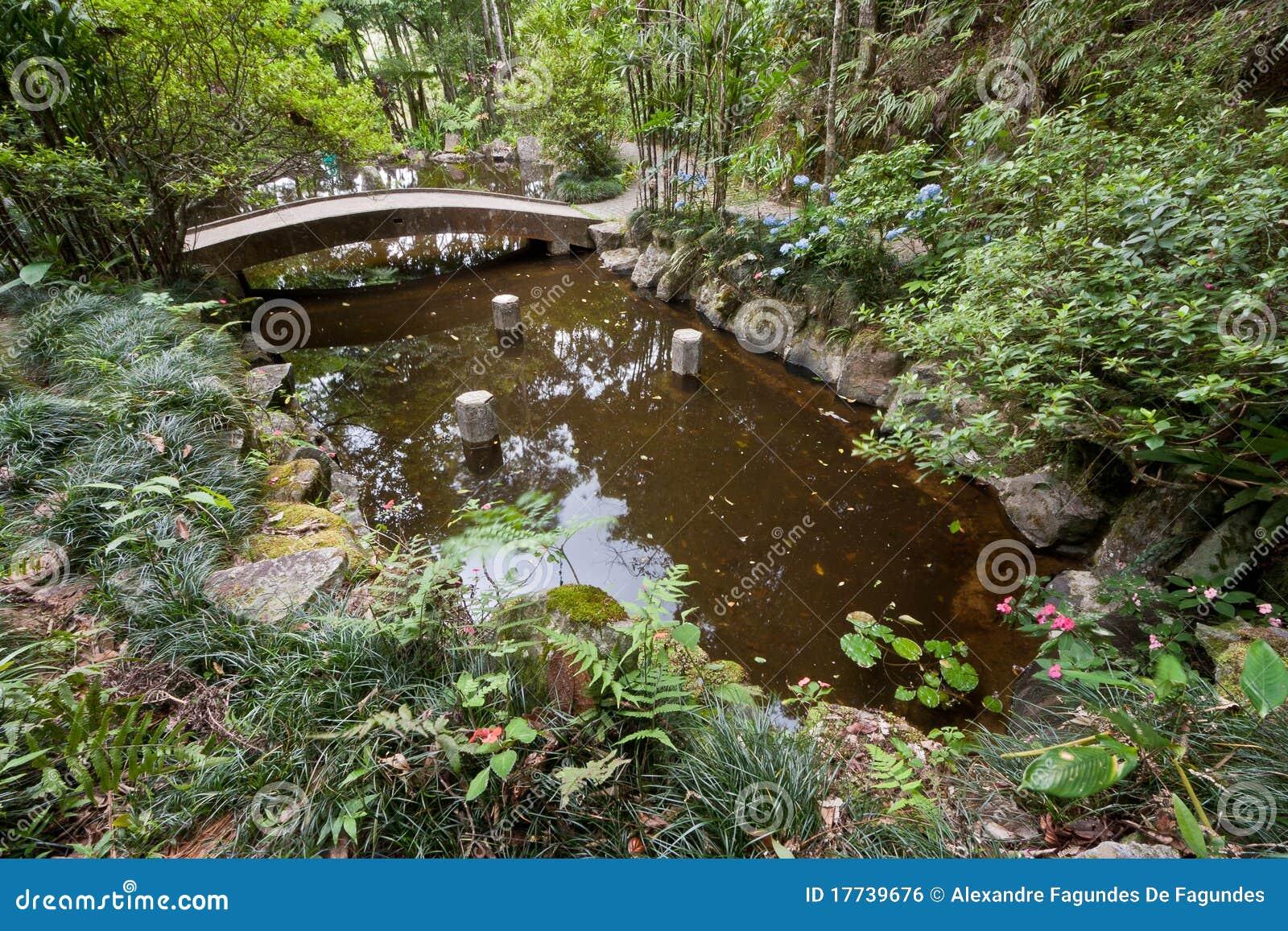 Een vijver in het tropische bos stock foto afbeelding for Een vijver