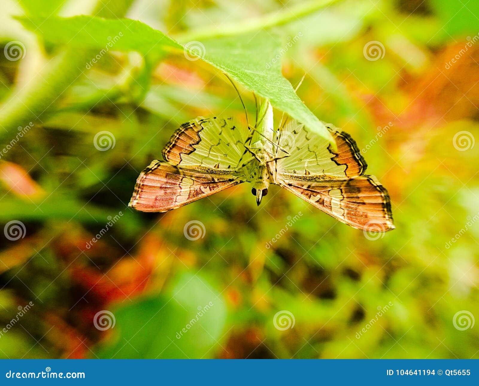 Download Een Vlinder In De Rug Van Een Groen Blad Stock Foto - Afbeelding bestaande uit vleugels, zijn: 104641194