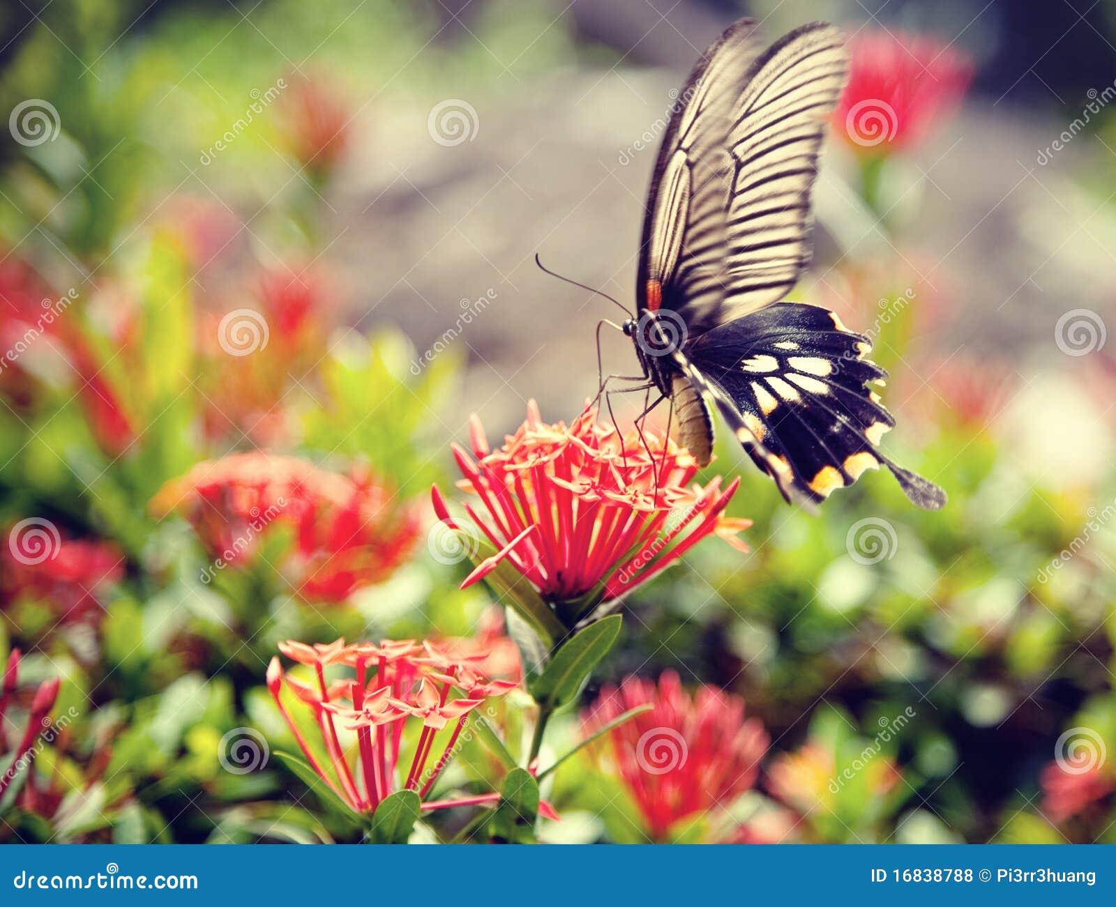 21 mooie kleurrijke vlinder - photo #28