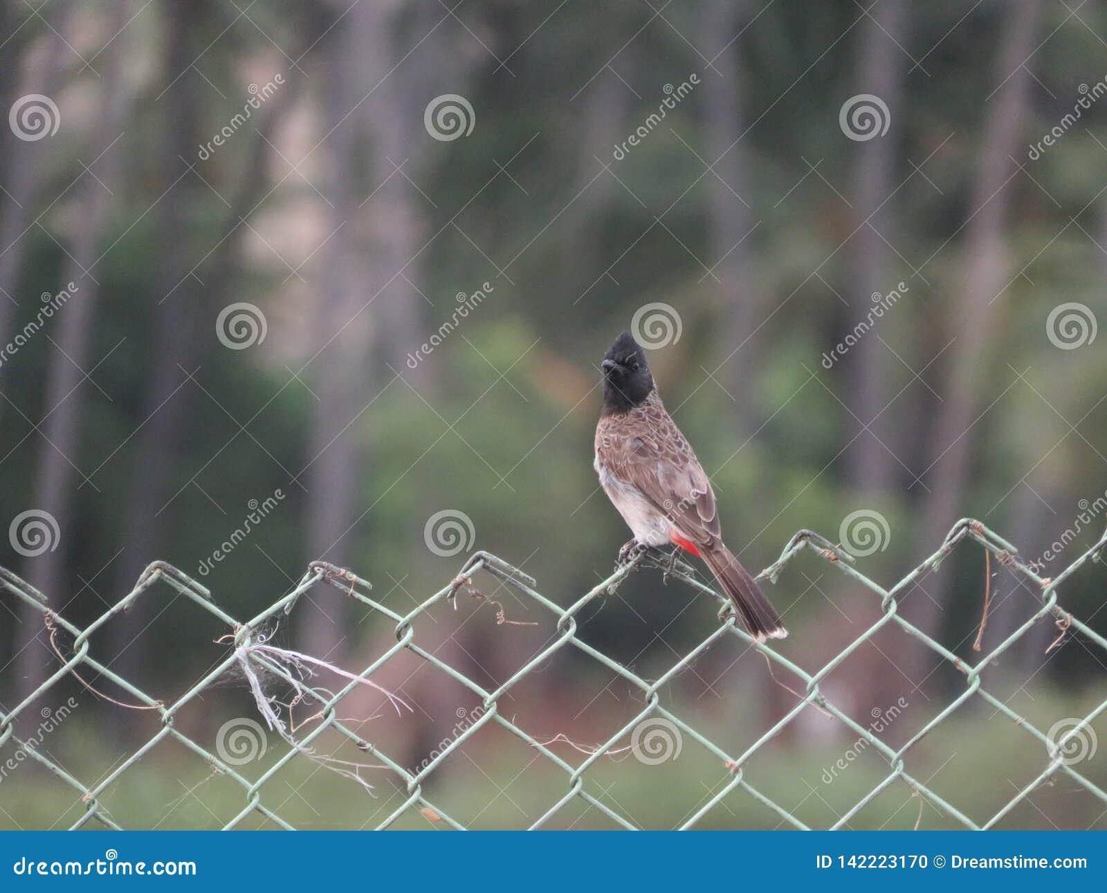 Een vogel op een omheining
