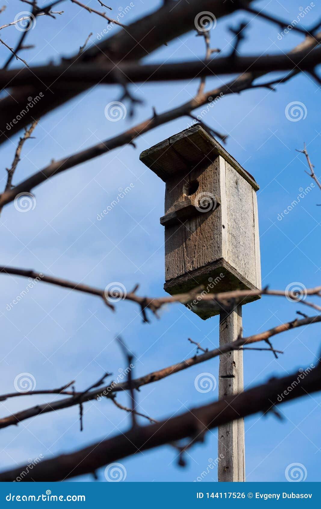 Een vogelhuis op een houten stok door takken met blauwe hemelachtergrond