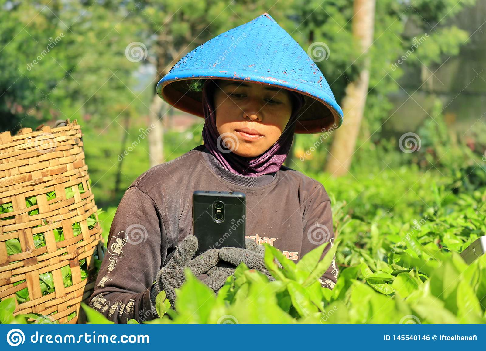 Een vrouwelijke werknemer in een theeaanplanting