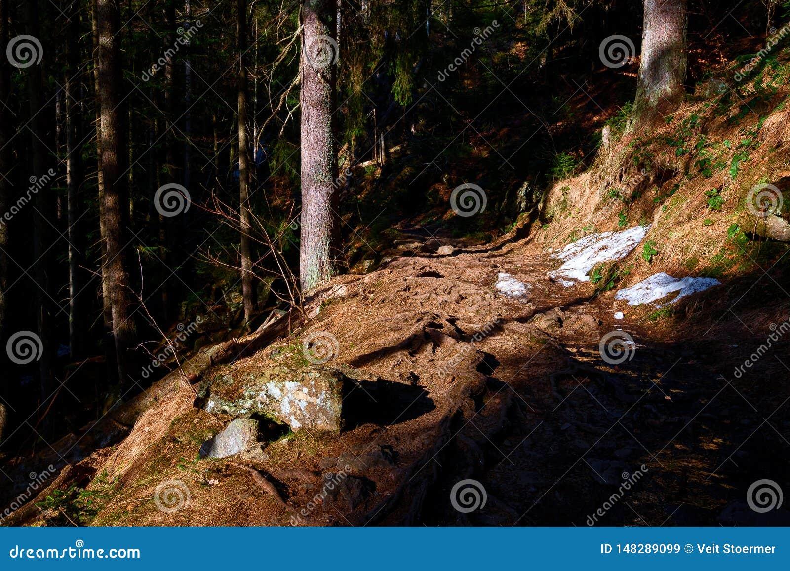 Een weg in het bos