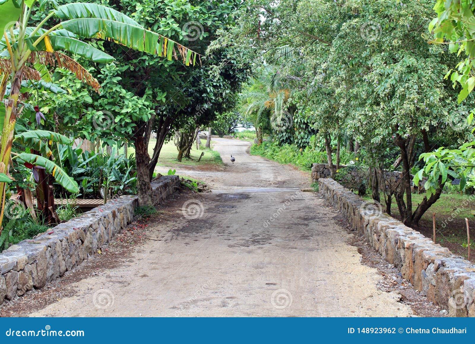Een weg, weg in een park, Mauritius