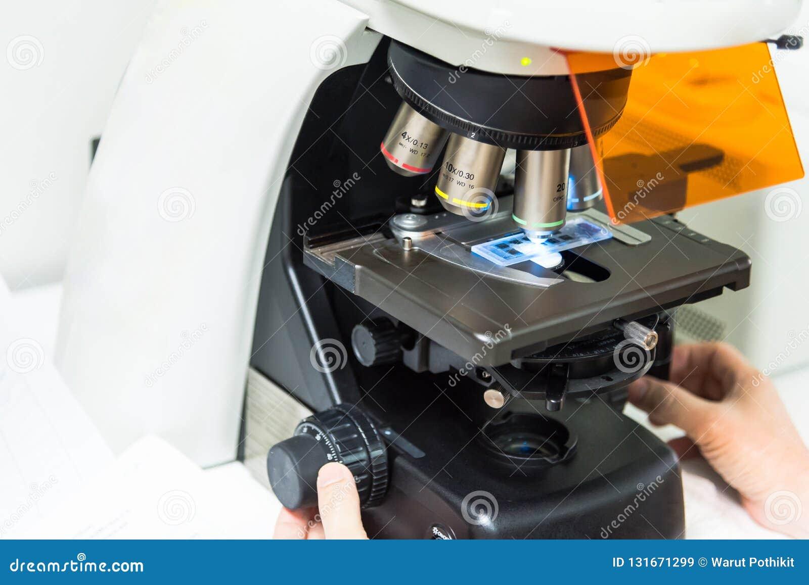 Een wetenschapper die de celmorfologie van celcultuur kijken