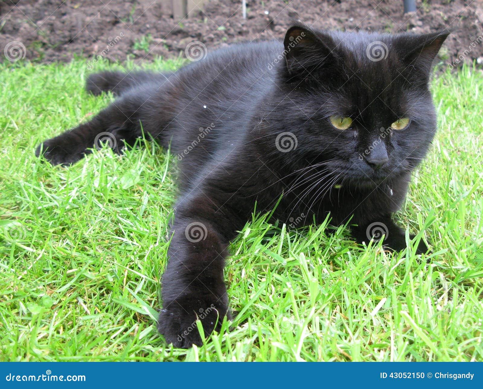 Zwarte pussy op
