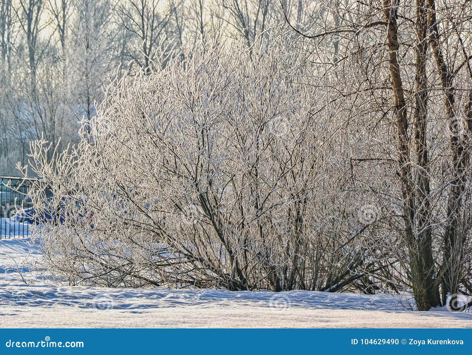 Download Een Zonnige De Winterdag Heilige-Petersburg Visserij Stock Foto - Afbeelding bestaande uit hemel, nevel: 104629490