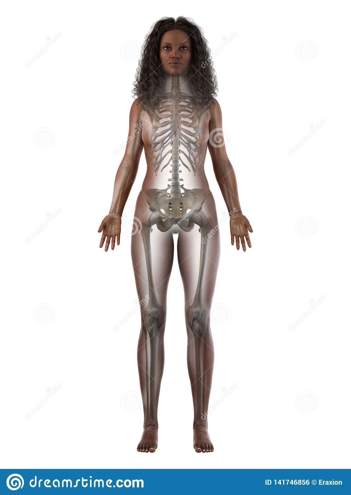 Een zwart wijfjes skeletachtig systeem