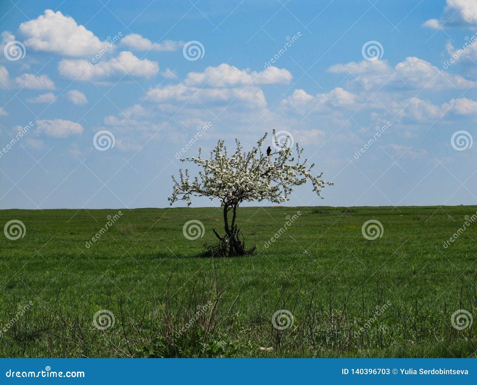 Een zwarte vogel zit op een tak van een eenzame die boom met witte bloemen in het midden van een eindeloze groene weide tegen wor