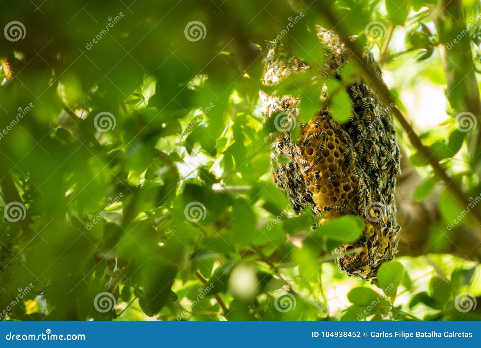 Een zwerm van bijen