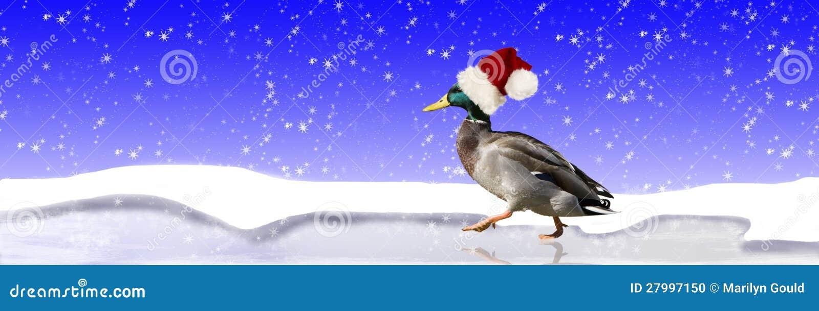 Eend die de Hoed van de Kerstman dragen
