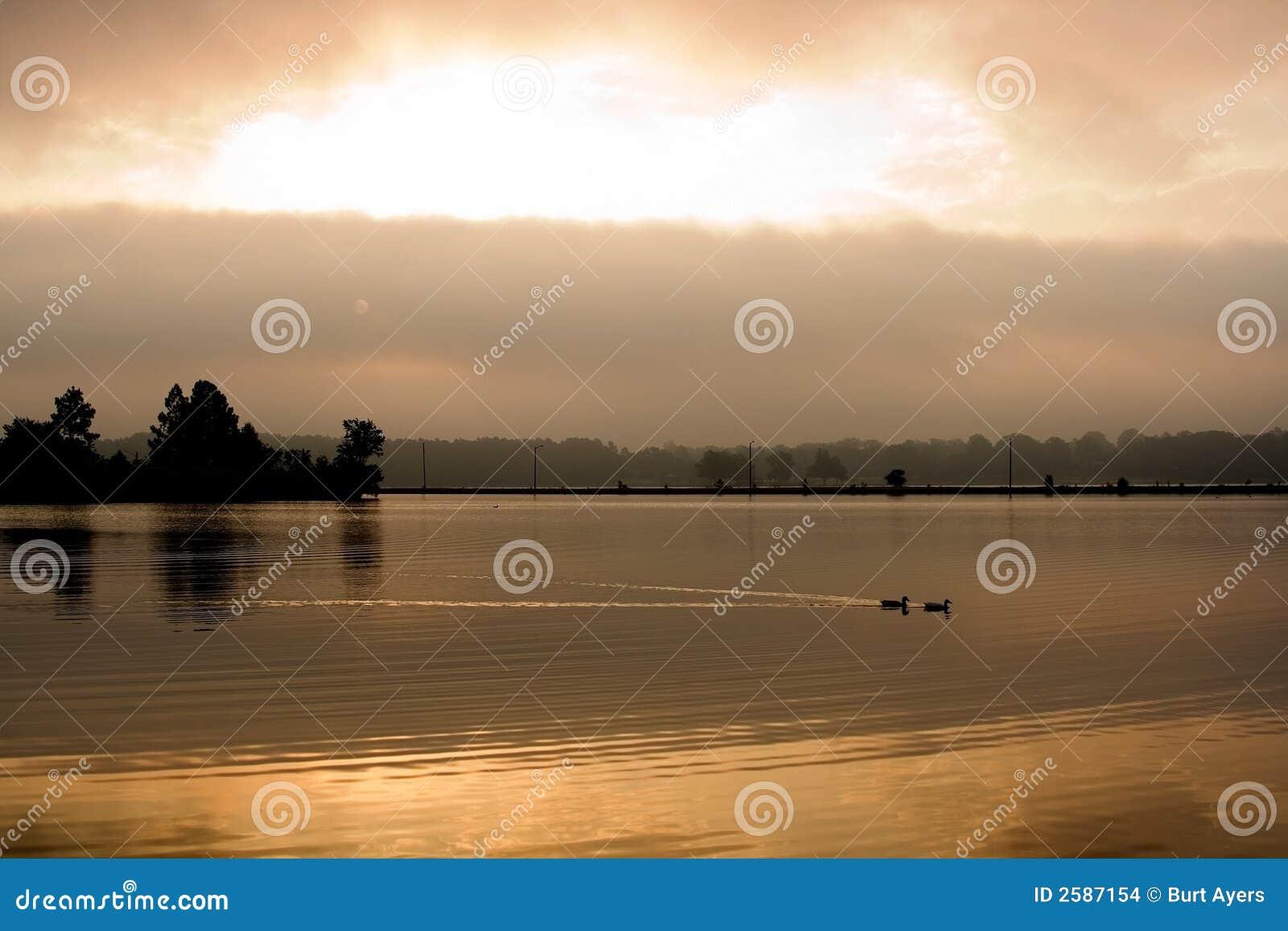 Eenden op gouden meer