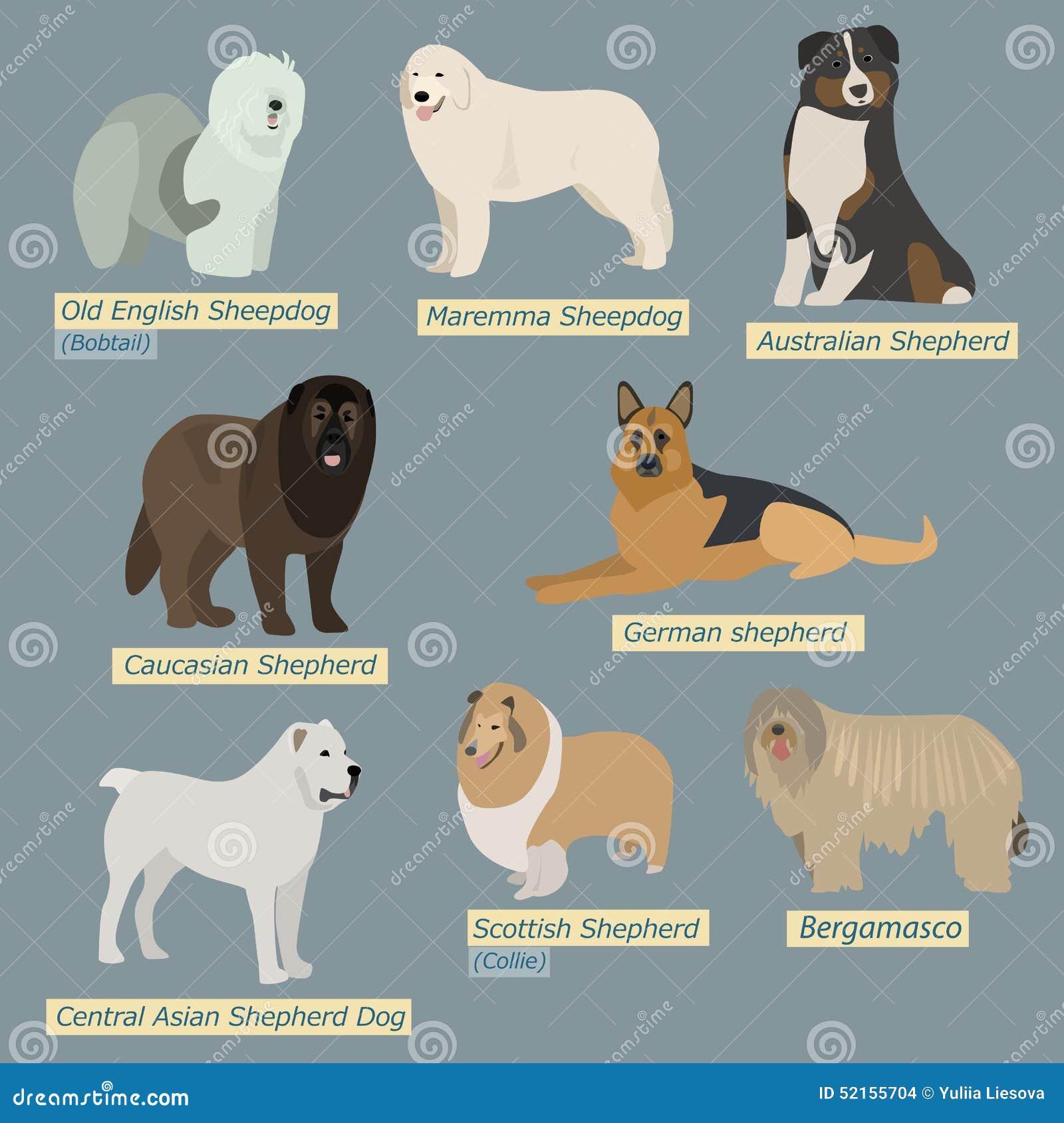 Eenvoudige silhouetten van honden Soorten herdershonden