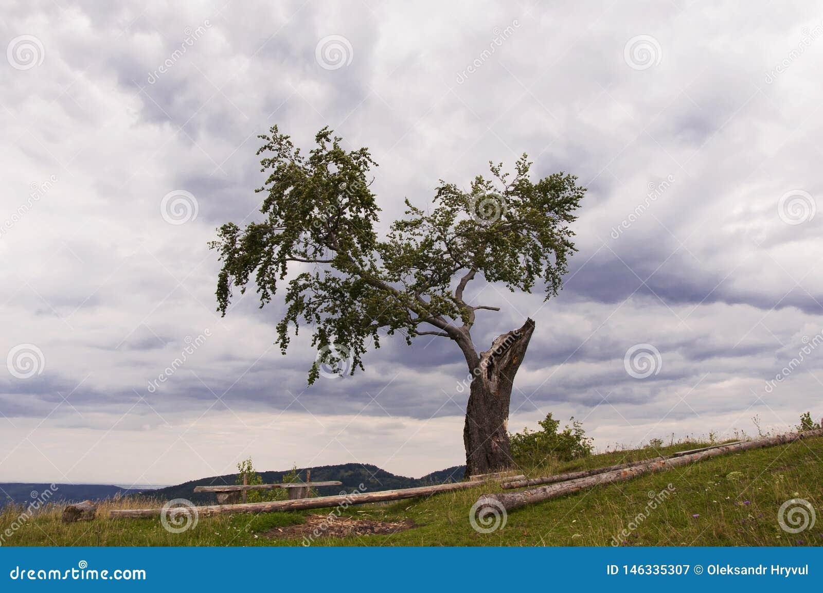 Eenzaam die hout bovenop de berg, met bliksem wordt gebrand