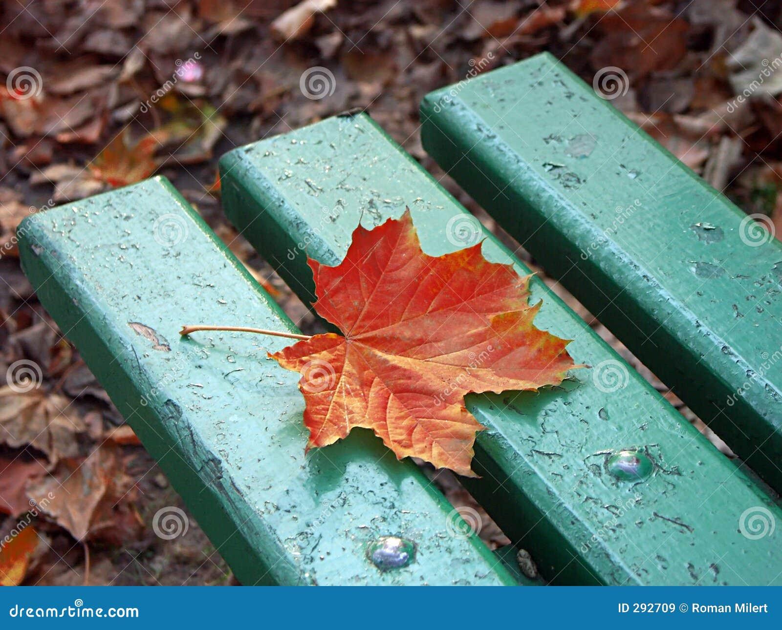 Eenzaam esdoornblad