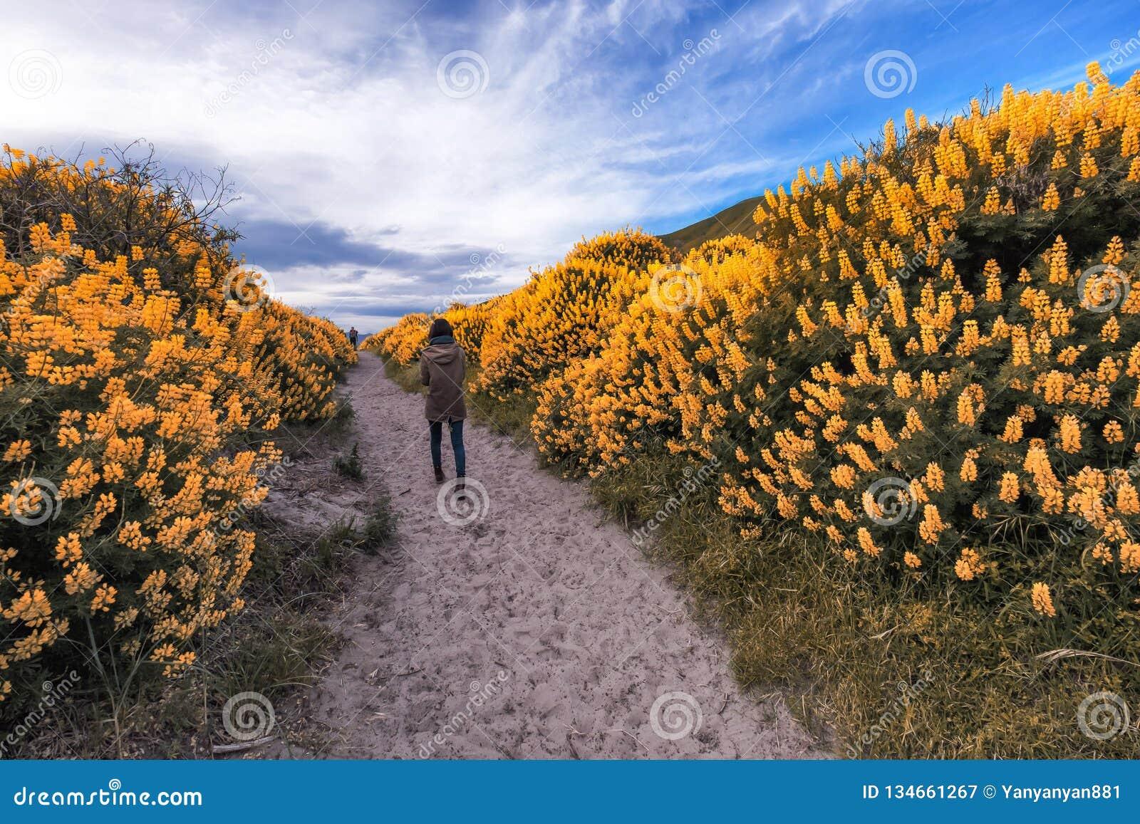Eenzaam meisje die langs een lange smalle die weg lopen door lange struiken met gele struiklupine wordt omringd