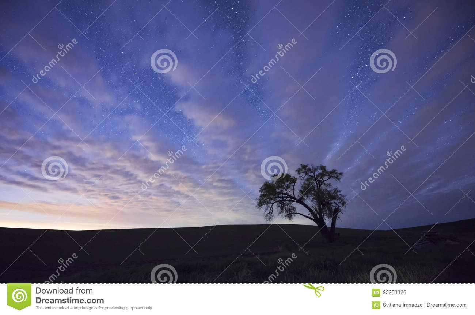 Eenzame boom bij nacht