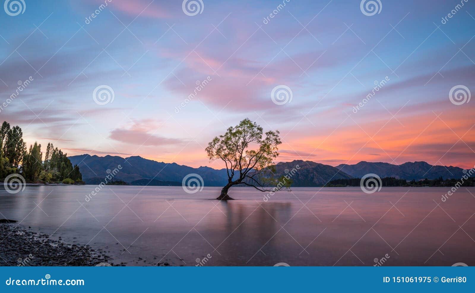 Eenzame boom die zich in Meer Wanaka, Nieuw Zeeland bij zonsondergang bevinden