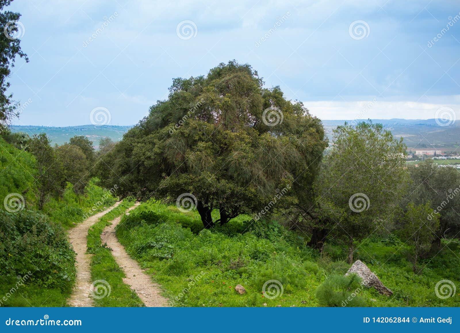 Eenzame boom op de weg