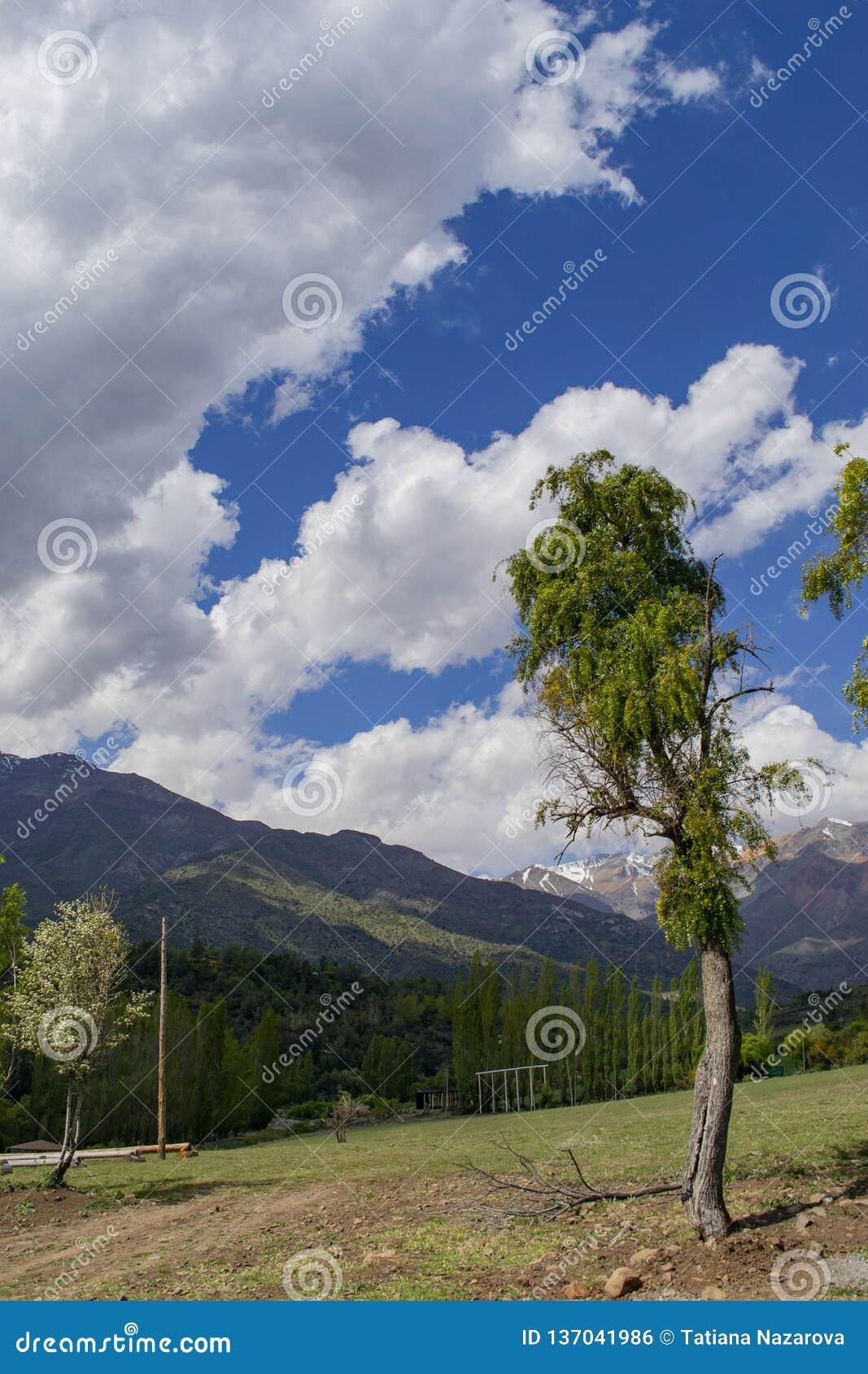 Eenzame boom op een helling die de bergen en de wolken overzien